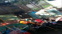 深圳动物园海狮表演街舞breaking托马斯,倒立顶球,水上跳跃翻滚,非常有趣搞笑,广西卢超原创实拍旅游视频