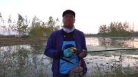 蓝旗鱼路亚 | 金秋猎黑炸口叭叭叭 这个季节的黑鱼是饿疯了吗?