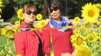 葵花朵朵向太阳