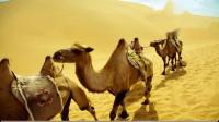 时光幸福广场舞 正背面青春活力健身操 好学【沙漠骆驼】
