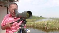 护鸟15年他在洪湖深处独自坚守