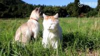 草地上发现两只小猫,想带回家才发现有主人,怎么办啊