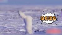 家庭幽默录像:小狐狸这种觅食方式,一头扎下去,脸不痛吗