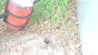 2000摄氏度的铝水倒入老鼠洞,镜头拍下全过程,心疼老鼠一秒