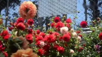 看完印度的山水美景_再参观一下印度的花展吧