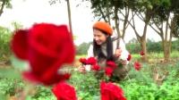 新春颂献——湛江阳光玫瑰生态园