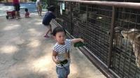 """游客误把苹果手机当苹果投喂给棕熊,网友:最昂贵的""""苹果""""!"""