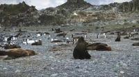难忘的南极之旅-登上南极大陆