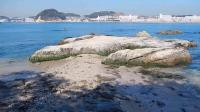 燈明堂海岸 三浦半島の海岸