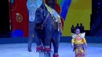 马戏团会表演的大象出租大象拍摄电影景区大象出租服务微信电话