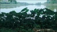 烟花三月松山湖