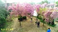 无锡鼋头渚樱花谷  老金摄像_20190321