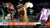 悲哀!幼鲸在菲搁浅死亡,体内惊现40公斤塑料垃圾,让人心痛!