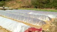 西林县皆马村插秧的季节了。