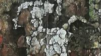 肌理岩彩人物画一一国协会员禹海亮作品。