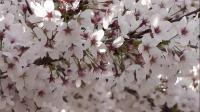 歌曲欣赏:春暖花开