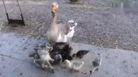 漠羽系列特别专辑 16 妈妈只是为了孩子在请求喂养
