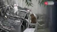 觅谱一露生命篇 22 有爱心的流浪猫