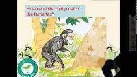 前五little chimp and the termites