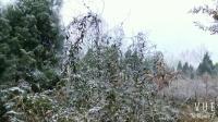 2018.2.17第一场雪