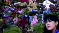 傣族歌曲 朗茉赞涵 – 心太软(傣语版)。越南版:Con Tim Đang Cố Quên -  Hồ Quang Hiếu