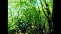 [Trail running]在初夏日本貫穿山區