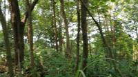 深林深处的老黑尾胡蜂洞
