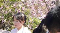 2019年4月京都奈良樱花之旅