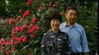 紫荆公园赏月季花