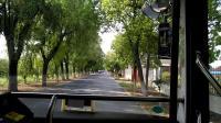 【崇明巴士】横沙3路公交车(Z8B-0030)(兴隆村-新民镇)【VID_20190608_145908】