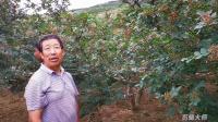 高产优质花椒示范园关键技术