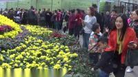 重庆万州西山公园 钓鱼池 菊展