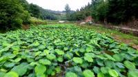 丹江口市凉水河八里寨村航拍视频