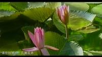 CCTV请你欣赏-云南花卉