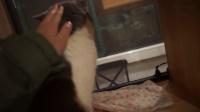 【ZY】VLOG  —   猫咪咖啡馆