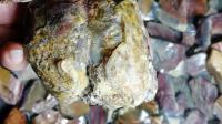 对石 最近把阿拉善彩玉老皮这个坑出来的玉化料收了一半以上  这种玉化俏色质地羊脂一捏仿佛会冒油 细腻非常 赶快收新收彩玉老皮一箱阿拉善2019.6.25