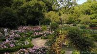 【Strawberry Alice】2019共青森林公园 八仙花主题展 - 2,2019-06-12 下午 上海共青森林公园
