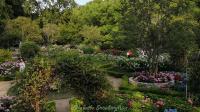 【Strawberry Alice】2019共青森林公园 八仙花主题展,2019-06-12 下午 上海共青森林公园