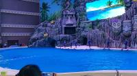 长隆海洋王国海豚表演01