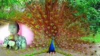 葫芦丝曲 美丽的金孔雀--杨扬20190718