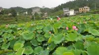2019,7,19,游山玩水为健康姐妹到凤凰紫园山荘留下仙女般的风彩画面。