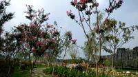 汉城花园之行