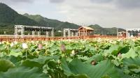网红打卡地杭州富阳区新登镇上山村万亩荷花池,人间仙境,好美啊。