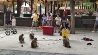 开封万岁山森林公园 情景动物(驯猴)表演