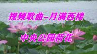 视频歌曲-月满西楼 19.7.24 中央公园赏荷花