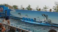 2019/8/7秦皇岛之行-海豚表演