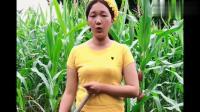缅甸美女直言缅甸姑娘很能干活,这样的生活条件让人心疼!