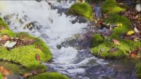 美丽的临江溪谷