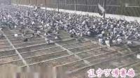 辽宁万博10月21日爱鸽洗澡视频
