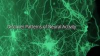 Inscopix nVista 在体钙离子细胞活动成像系统